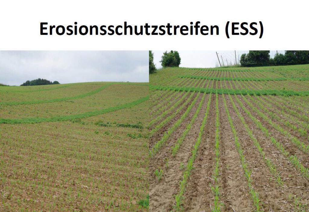Erosion Vermeidung 2016-07-11 (9)