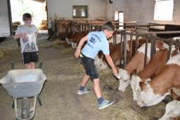 2017 OGV Kuh un Milch (17)