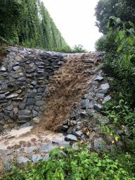 2018-07-31 Regenrückhaltebecken (2)